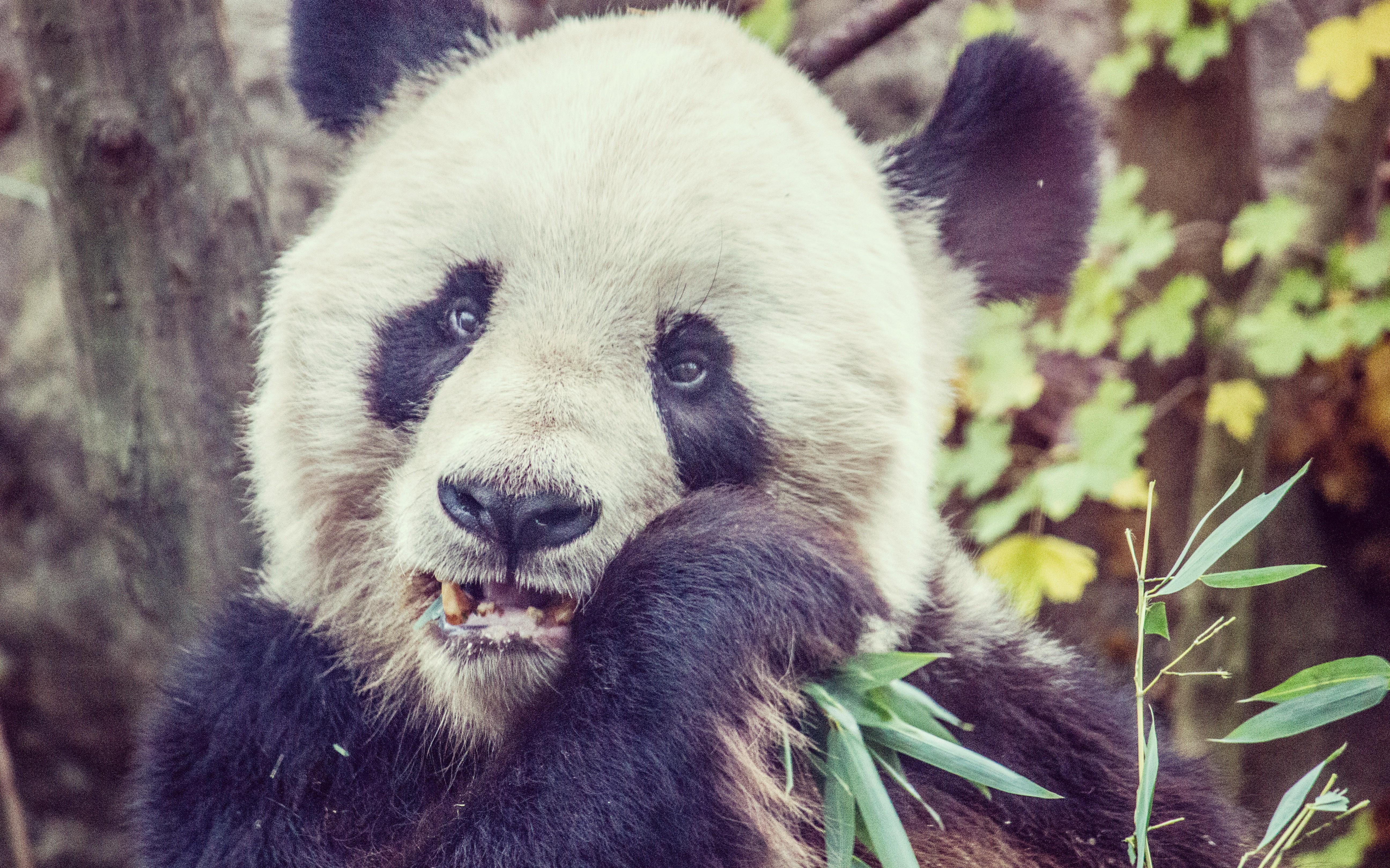 Make Python Pandas Go Fast - DZone Big Data