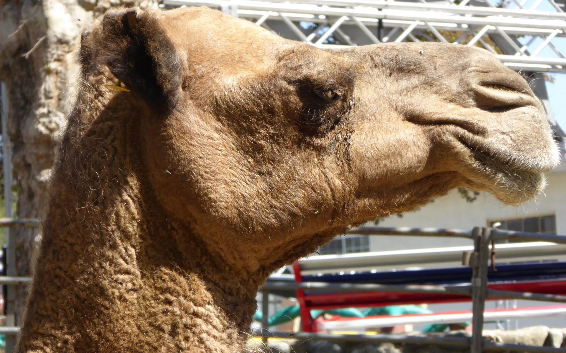 Apache camel content enricher dzone integration malvernweather Image collections