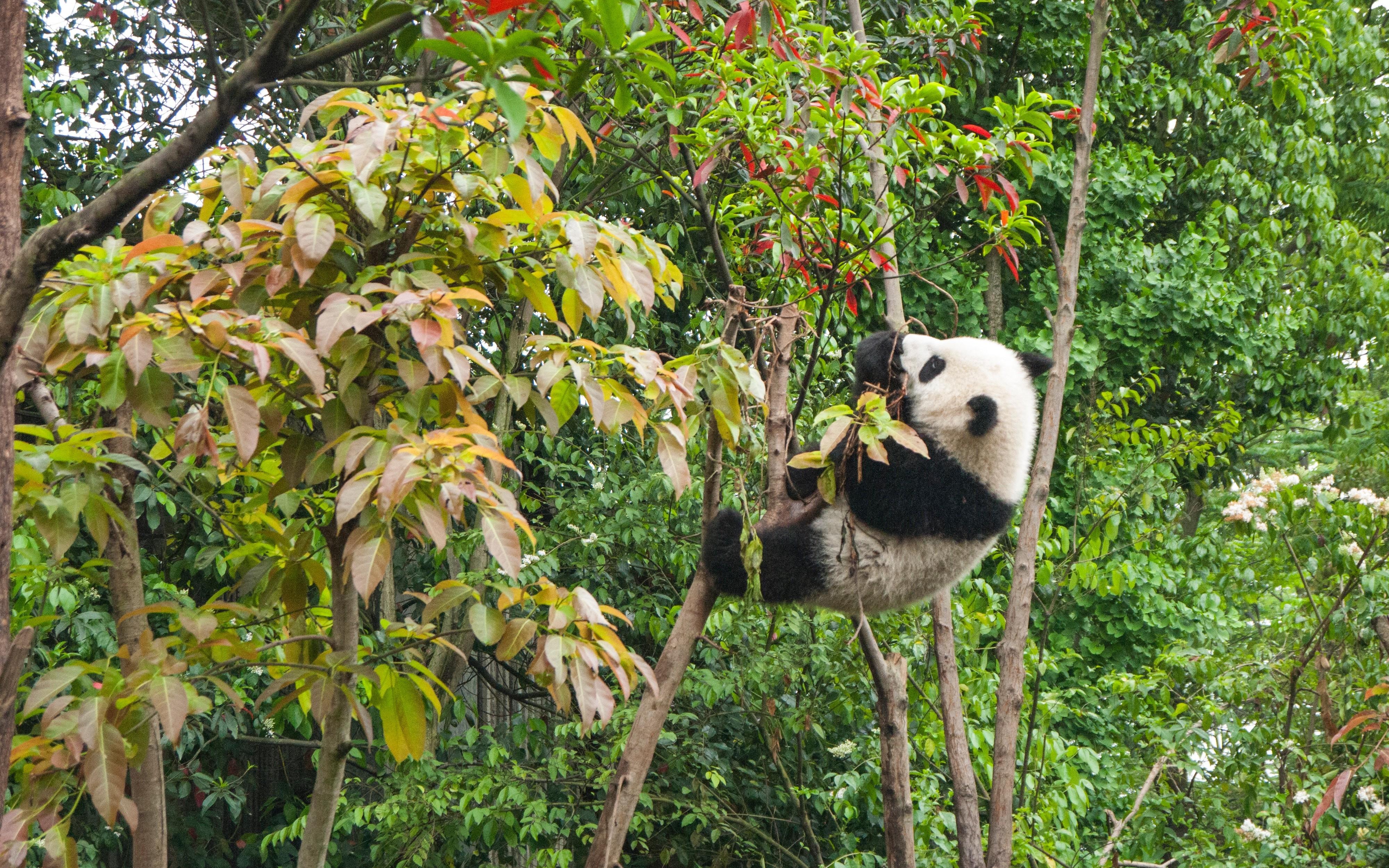 Pandas: Find Rows Where Column/Field Is Null - DZone Big Data
