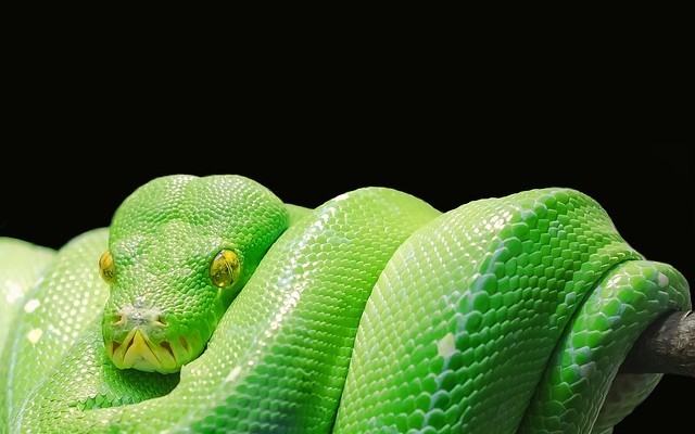 A Newbie Guide to Python - DZone Performance