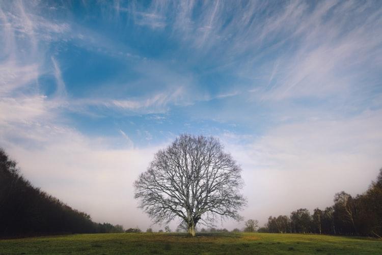 In-Order Binary Tree Traversal