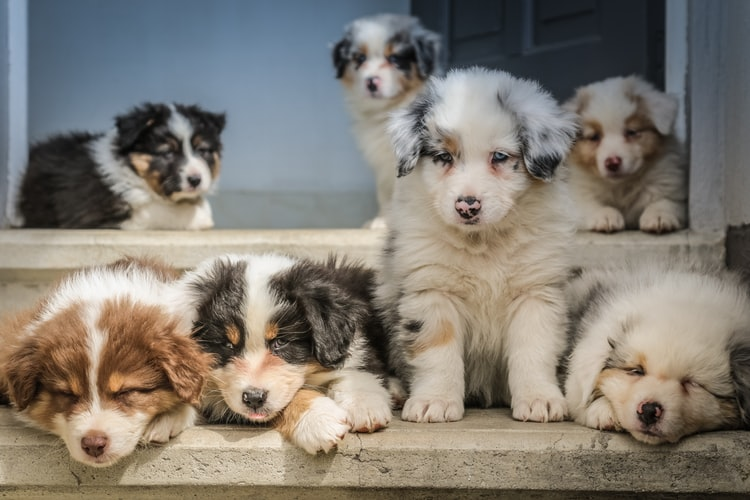 Adopt agile like you want to adopt these puppies!