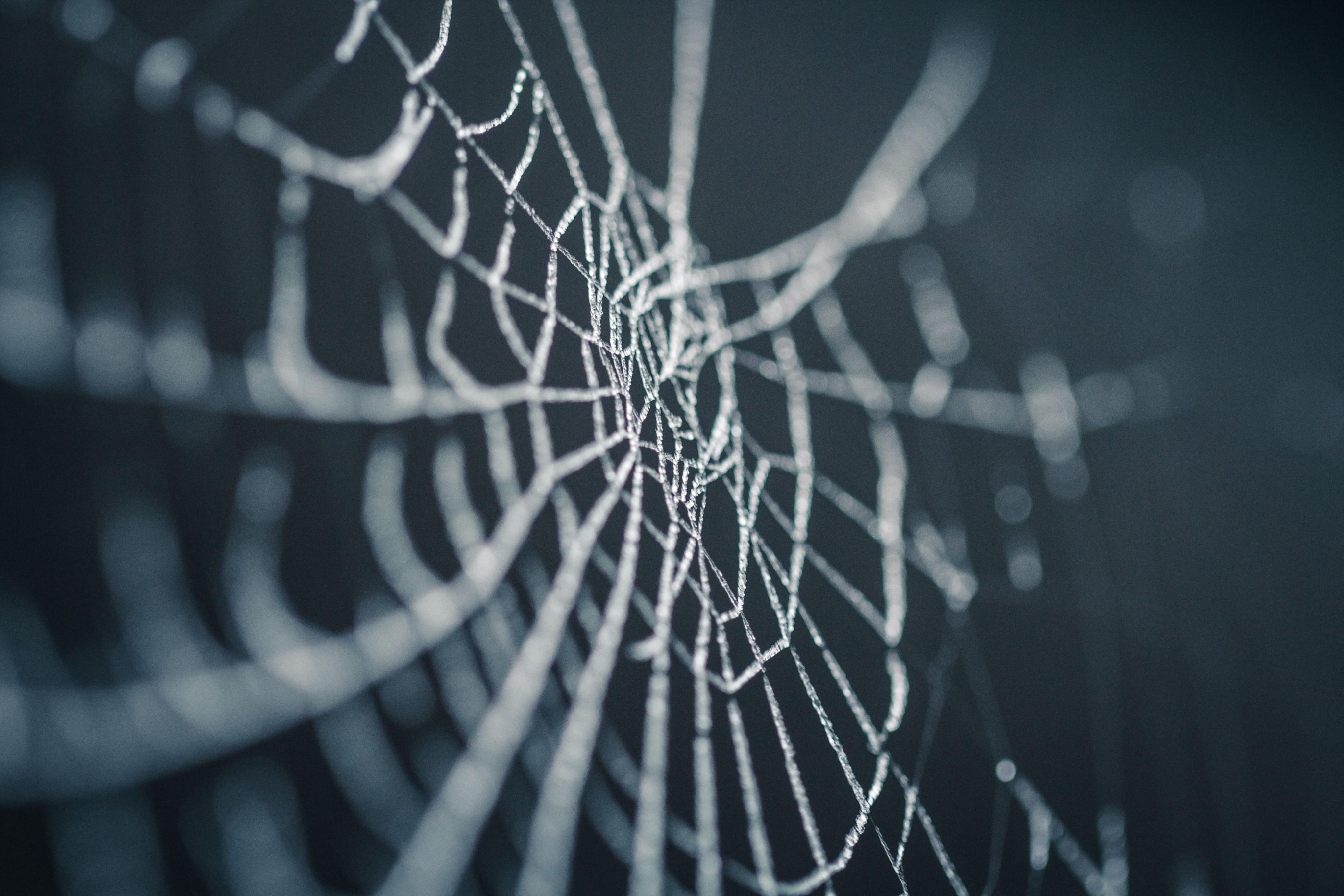 spider-web-in-rain