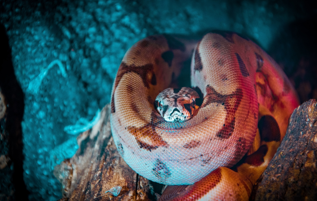 anaconda-in-cave
