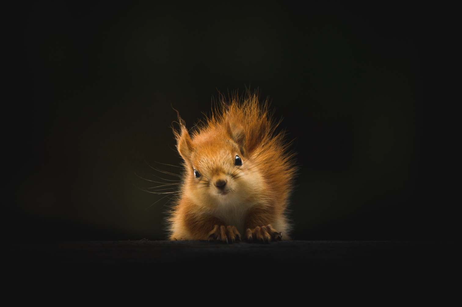 squirrel-looking-over-branch