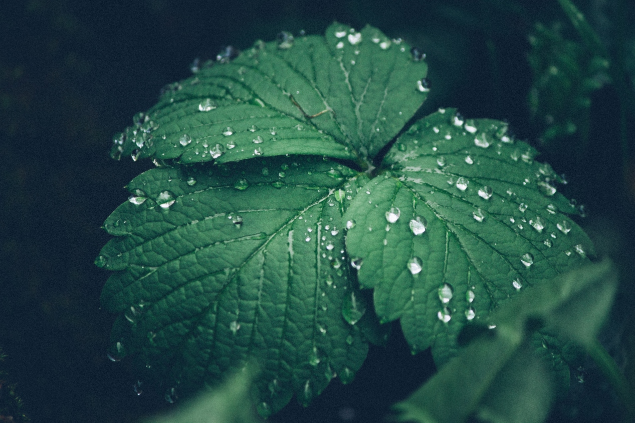 leaf-with-dew
