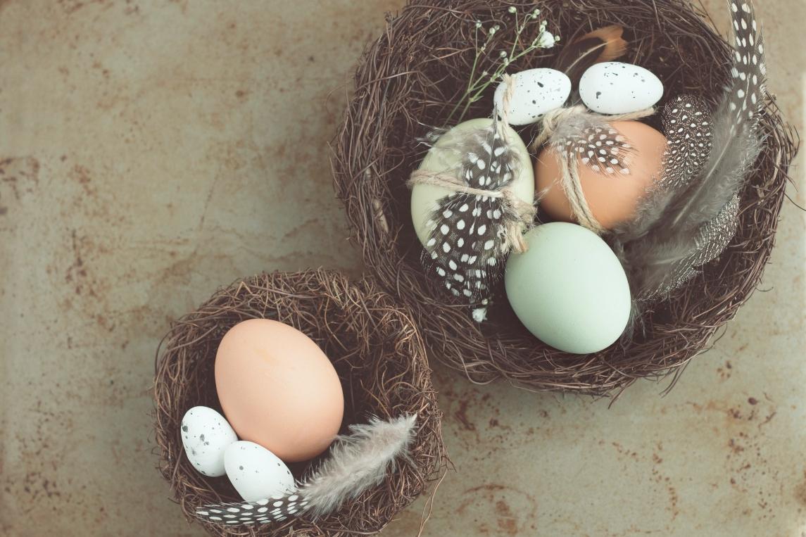 nest-with-bird-eggs