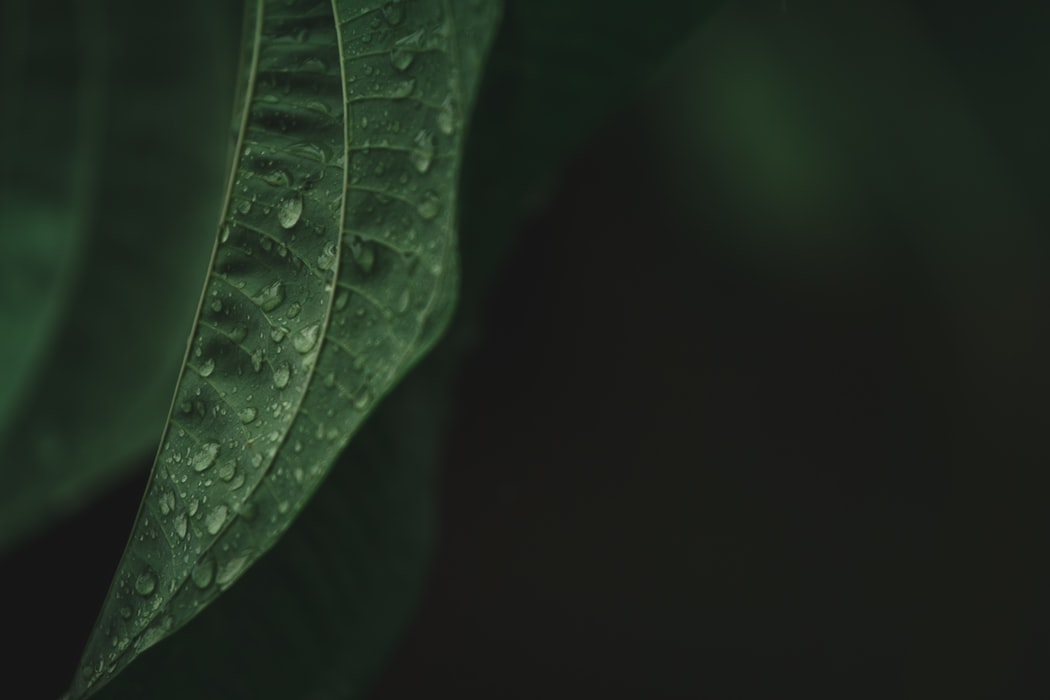 leaf with waterdroplets