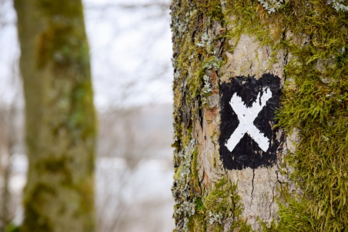 """tree with an """"X"""" drawn on it"""