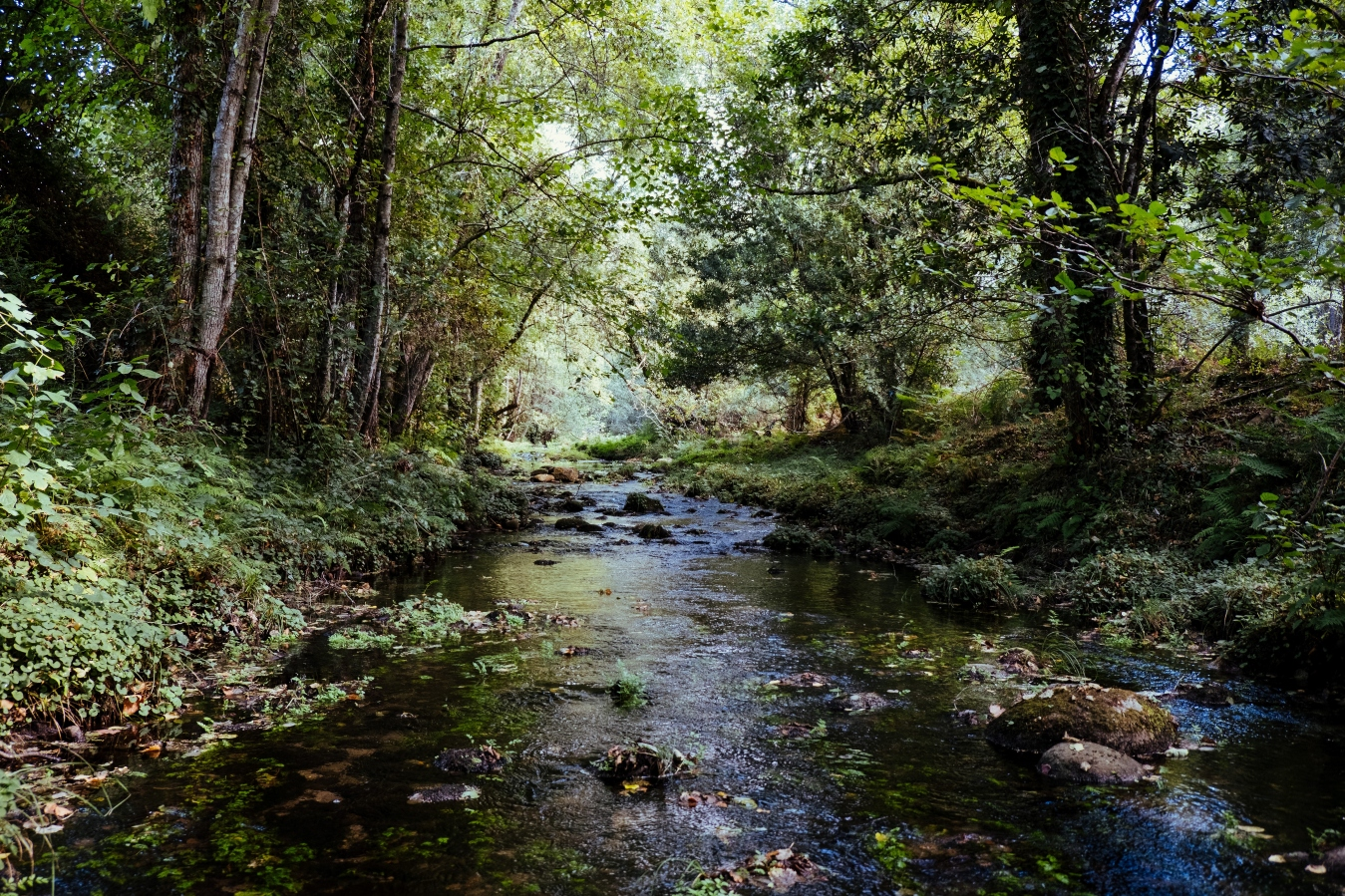 stream-in-forest