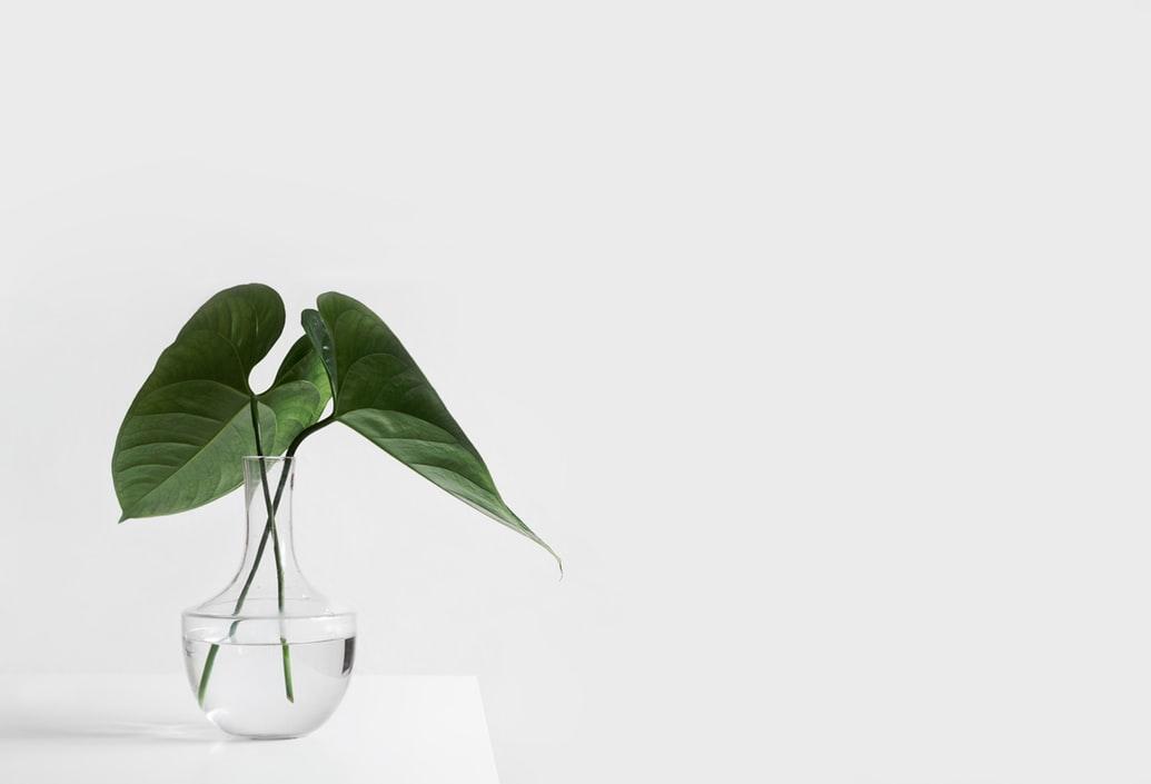 two leaves in vase