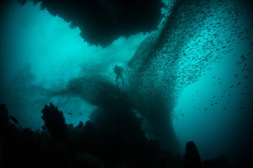 Person deep under water with several small fish