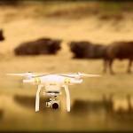 drone-safari