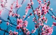Using Spring Data JPA Specification
