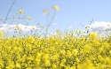 Spring Web MVC Annotation Examples