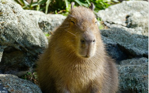 Inspect Network Traffic in Capybara Using the Poltergeist Driver