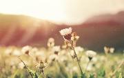 Spring Tips: Spring Batch and Apache Kafka [Video]