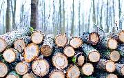 Export Kubernetes Logs to Azure Log Analytics With Fluent Bit