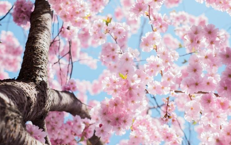 Using Spring MVC's @ModelAttribute Annotation