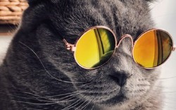 Stay Hip With the Latest Java and Spring Boot Using JHipster 6