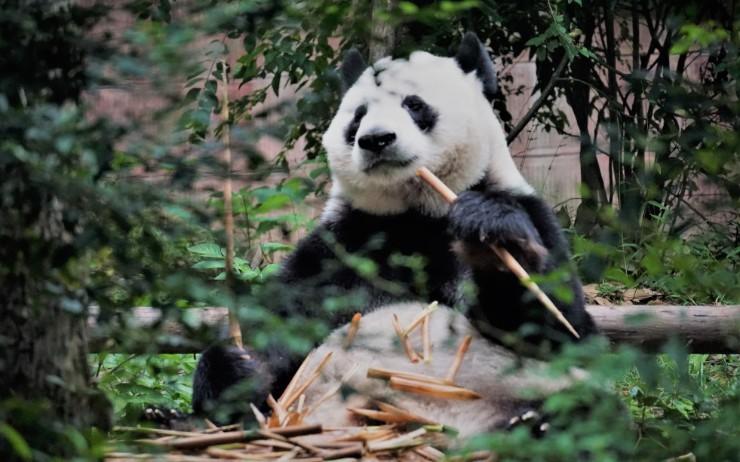 A Brief Overview of Pandas DataFrames