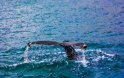 Create Fast and Easy Docker Images With Jib