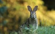 Spring Boot + RabbitMQ Tutorial — Retry and Error Handling Example