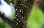 Comparing Grakn to Semantic Web Technologies — Part 1/3