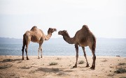 Managing Camel Rest Services Using Red Hat 3Scale API Management