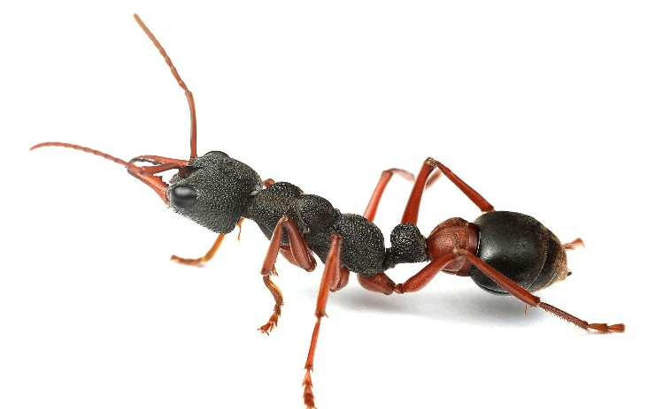 What Is Ant, Really?