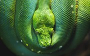 Python 101: Recursion