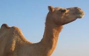 Spring Tips: Apache Camel [Video]