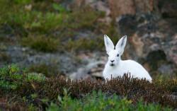 A Quick Dive Into The Retail APIs Rabbit Hole